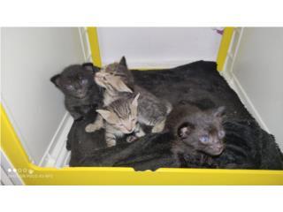 Gratis! Hermosos Gatitos Para Adopción  Puerto Rico