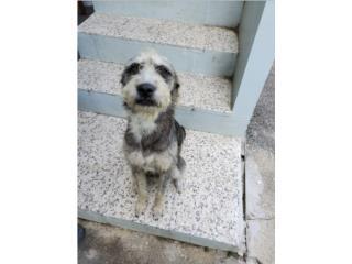 Hermosos perritos para adopción Puerto Rico