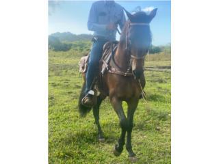 Hermoso caballo entero grandote Puerto Rico