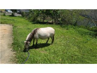Vendo o cambio ponny Puerto Rico
