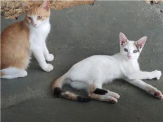 Gatito y Gatita 3 meses Puerto Rico