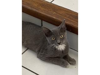 Puerto Rico Preciosos gatitos de 3 meses para adopción , Perros Gatos y Caballos