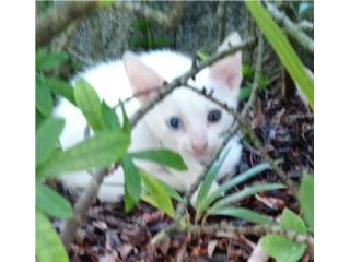 Precioso gatito Puerto Rico