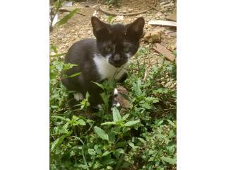 Bello gato bebe Puerto Rico