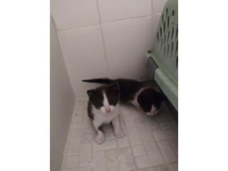 Gatos  Puerto Rico