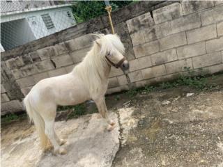 Hermoso Pony Puerto Rico