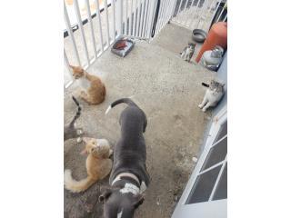 Se regala gato adulto Puerto Rico