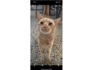 Se regal gato adulto 2 años  Puerto Rico