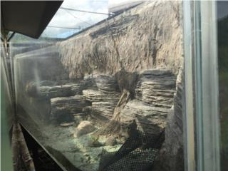 Peceras gigantes en acrilico Puerto Rico