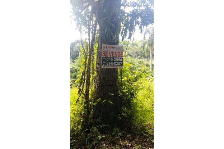 Clasificadosonline Com Autos >> Aibonito Puerto Rico, Venta Bienes Raices Hatillo Puerto ...