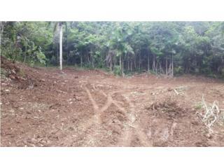 12 CUERDAS BO.PUGNADO AFUERA $59,000 agua y lus, Vega Baja Real Estate Puerto Rico