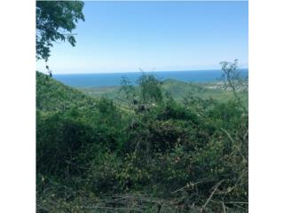 Caimital Puerto Rico
