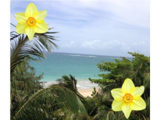 KING�S COURT PLAYA  Mejor Playa de Condado, San Juan-Condado-Miramar Real Estate Puerto Rico