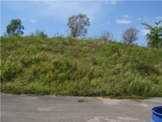 Bienes Raices Solar en Camuy: 955 Mt.Bo. Zanja <St Los Vega?  Puerto Rico