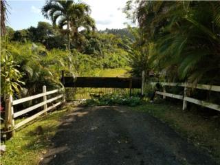 Bienes Raices Bo. Llanos  Puerto Rico