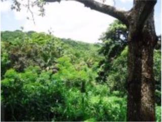 Carr. 857 Km. 4.3 Lote 5 Bo. Canovanillas, Carolina Real Estate Puerto Rico