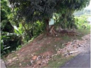 Carr. 782 Km. 7.9 Com. Naranjito Calle Begonia 83 , Comerío Real Estate Puerto Rico