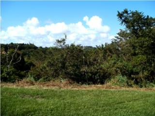 Bienes Raices Humacao - Palmas Puerto Rico