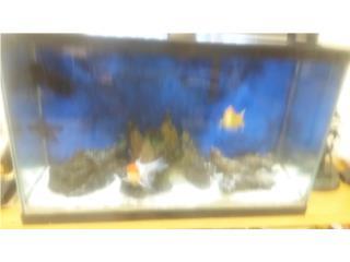 Pecera 30 galones Tres Goldfish, Maritza Mere Puerto Rico