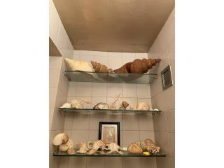 Coleccion de caracoles , Sucesion Wood Vicente Puerto Rico