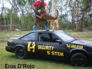 Perros Entrenados, Family Dog K-9