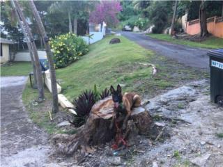 Puerto Rico Malinois Macho AKC Entrenado 6 meses REDUCIDO, Perros Gatos y Caballos