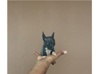 CHIHUAHUA POCKET NENA BLUE, Pet Palace
