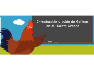 Charla educativa sobre Gallinas Ponedoras GRATIS!, GALLINAS URBANAS