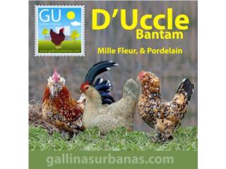 D Uccle Bantams en MilleFleur y porcelana, GALLINAS URBANAS