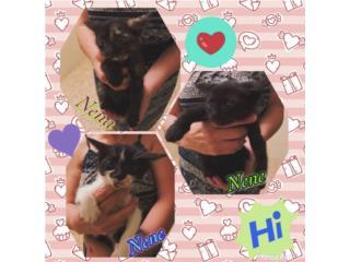 Gatitos para Adopción , Maggie's Kittens