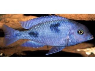 BLUE DOLPHIN HAP, OUTLET PET CENTER & CENTRO AGRICOLA