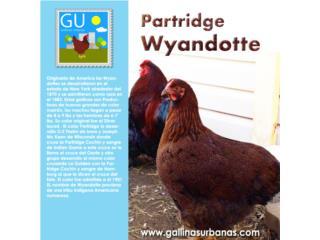 Gallinas Partridge Wyandotte(RARAS) , GALLINAS URBANAS