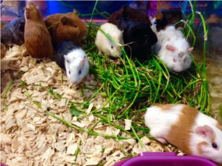 Variedad de guimos, Isabela Pet Shop