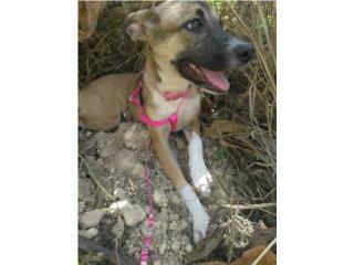 Clasificados Online Mascotas Perrita de 4 meses.