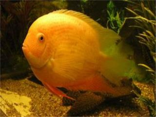 RED SPOTTED SEVERUM, OUTLET PET CENTER & CENTRO AGRICOLA