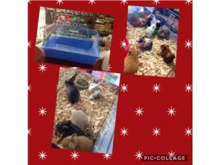 Guimo o conejo jaula y alimento, Isabela Pet Shop