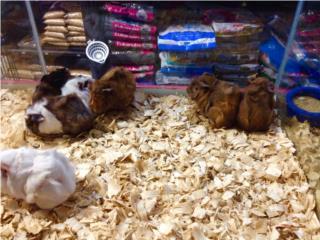 Muchos guimos , Isabela Pet Shop