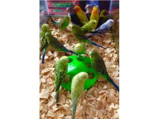 Pericos jaula y comida $30, Isabela Pet Shop