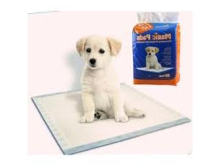 MAGIC PADS, OUTLET PET CENTER & CENTRO AGRICOLA