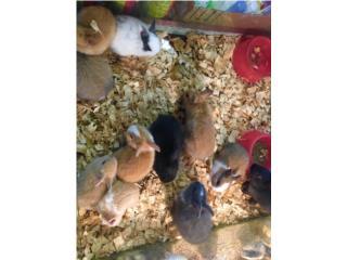 Muchos conejitos enanos, Isabela Pet Shop