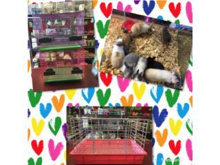 Especial conejo enano o guimo, Isabela Pet Shop