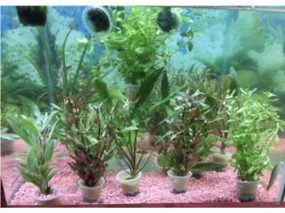 Plantas para acuarios Puerto Rico