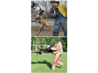 Pastor Belga Malinois, Another Level Dog Training