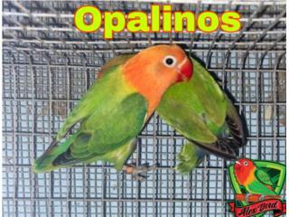 Compro lotes de aves llama si tienes Puerto Rico