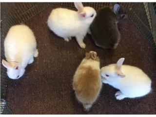 Conejos enanos, Isabela Pet Shop