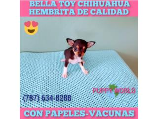 BELLA TOY CHIHUAHUA CON PAPELES-VACUNAS, Puppy world