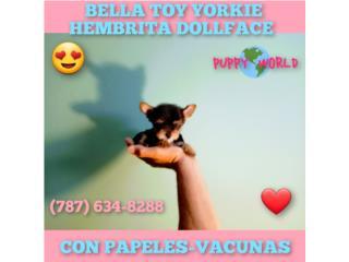 BELLA TOY YORKIE CON PAPELES-VACUNAS, Puppy world