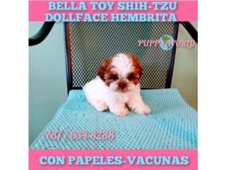 ESPECTACULAR BELLA TOY SHITZU CON PAPELES-VAC, Puppy world