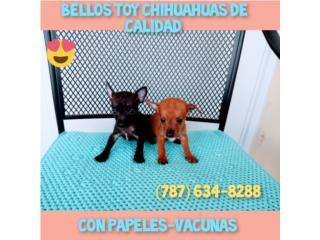 TOY CHIHUAHUAS DE CALIDAD CON PAPELES-VACUNAS Puerto Rico