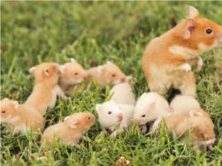Hámster,ratones y ratas, Family Pets